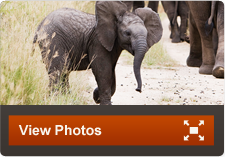 South Africa Safari and Tour Packages | Adventures By Disney