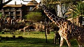 wdw-dak-jambo-house-villa-overview-animal-encounters-170x96.jpg