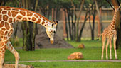 wdw-dak-villa-jambo-house-recreation-animal-programs-170x96.jpg
