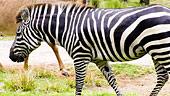 wdw-dak-lodge-villa-overview-animal-encounters-170x96.jpg